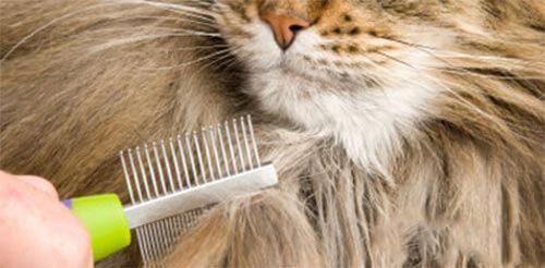 Очистить шерсть кота от клея